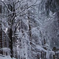winter-2010-089bos