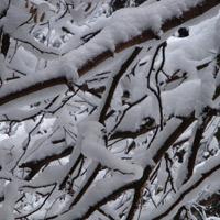 winter-2010-103